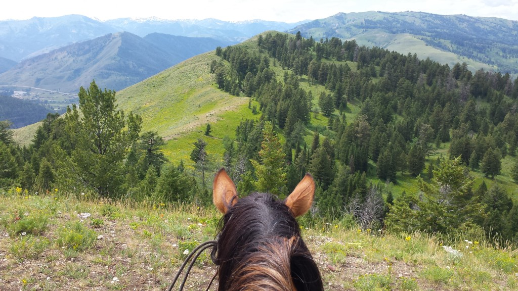 2000 vertical feet on horseback in the Bridger-Teton National Forest